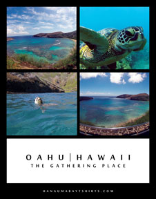 Hanauma Bay Oahu Hawaii Turtle Poster