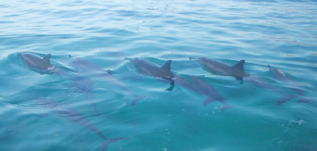 Hawaii Snorkel Tour with Dolphins on Oahu Hawaii