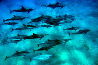 Oahu Hawaii Dolphin Snorkel Tour Adventure
