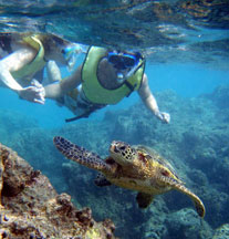 Hanauma Bay Snorkel Tours on Oahu Island